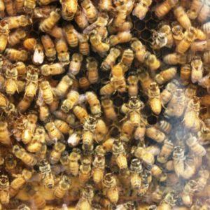 365 030 Bee 1