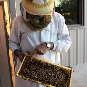 365 030 Bee 4