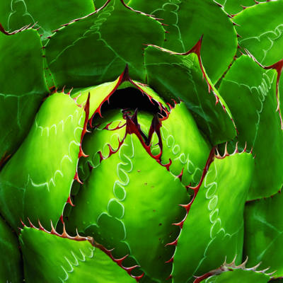 day 193: a is for agave