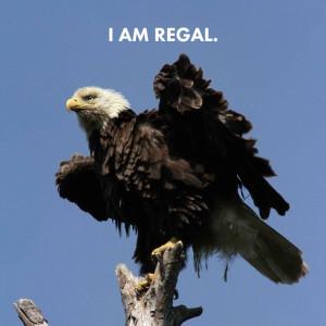 Awkward Eagles 02