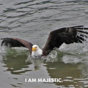 Awkward Eagles 04