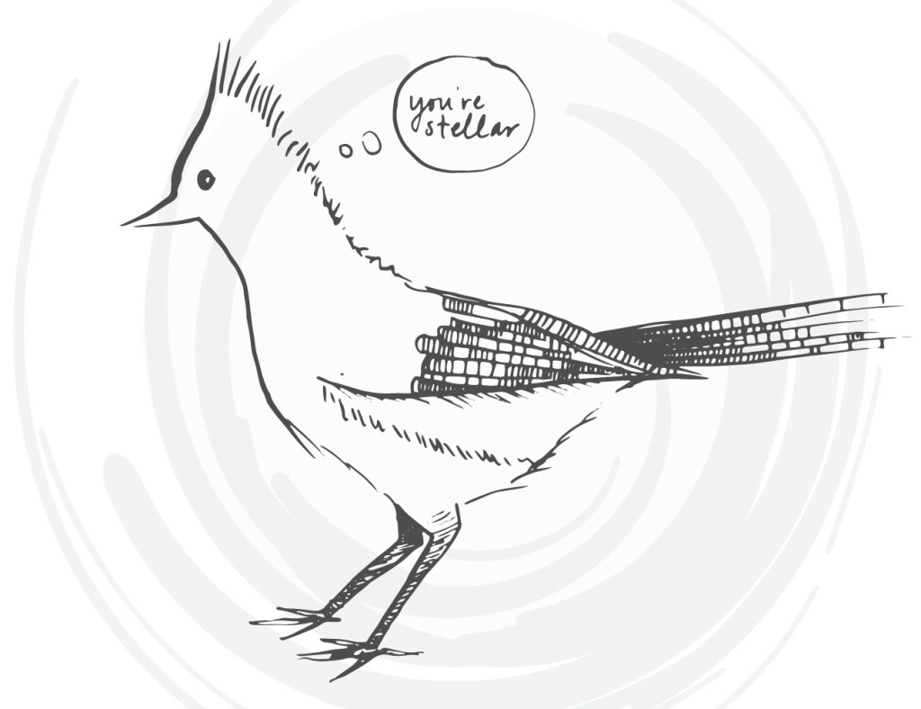 bird-cards-web-05