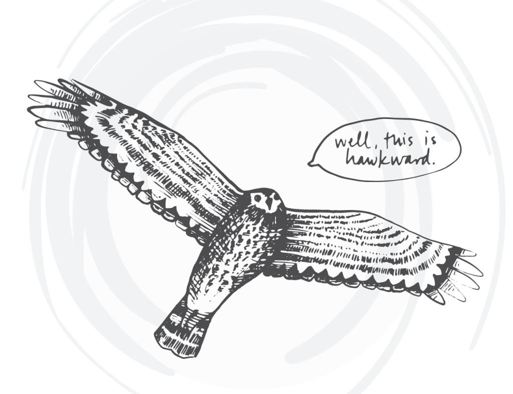bird-cards-web-13
