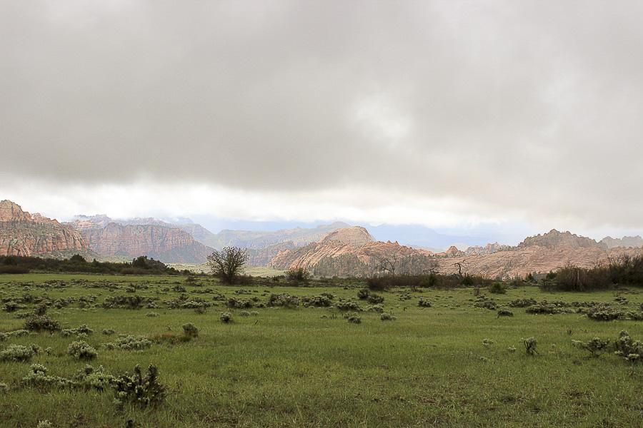 zion national park_15