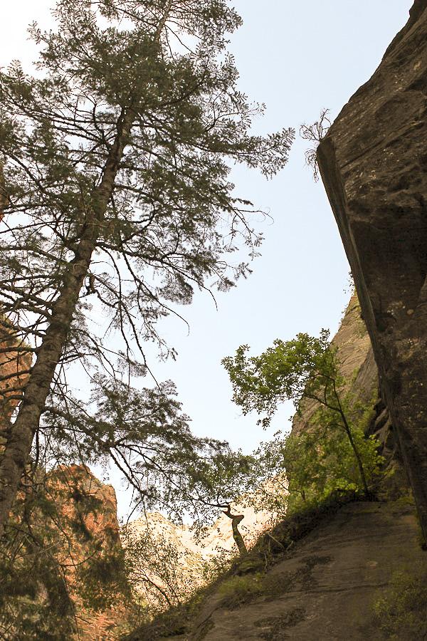 zion national park_4
