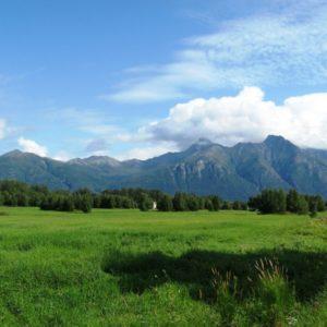 Hay Field (1)